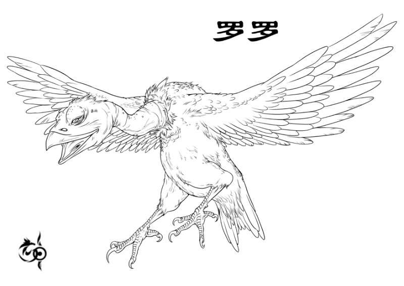 罗罗[鸟]插图