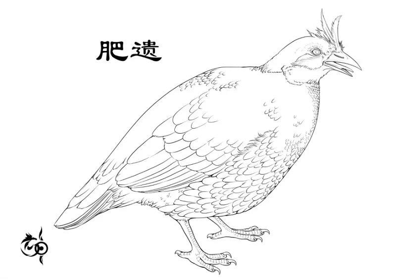 肥遗[鸟]插图