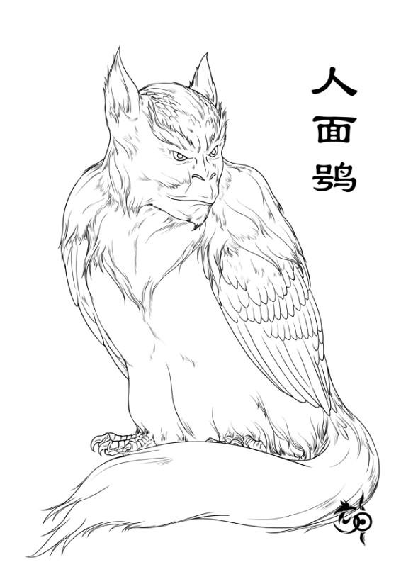 人面鸮插图