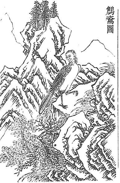 䳐鸟/𪆻鸟插图