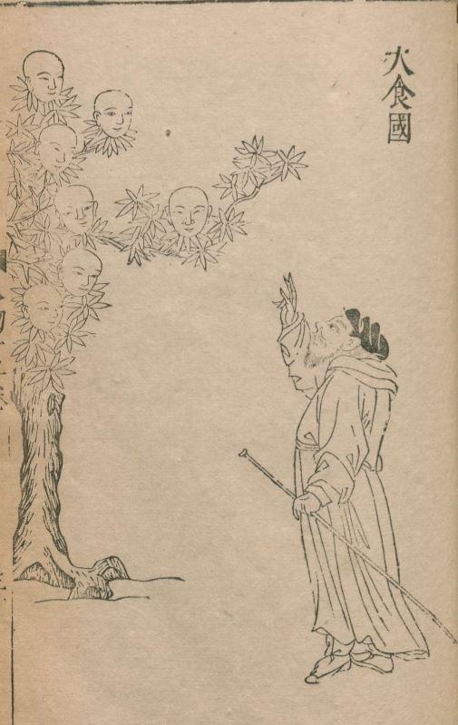 人面树(人木)插图