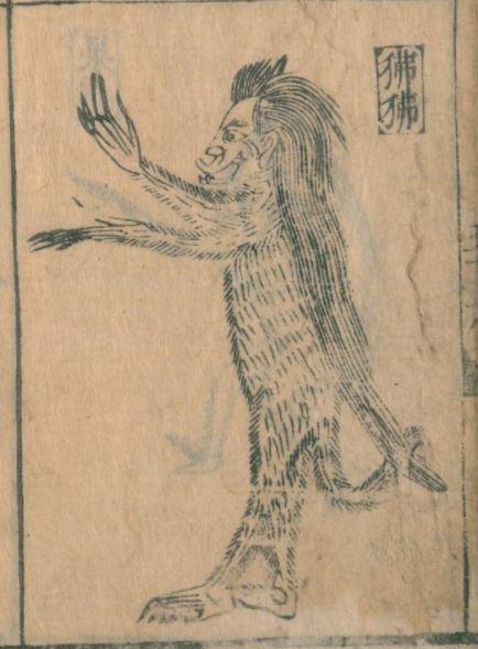 狒狒插图(3)