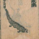 鲮鲤插图2