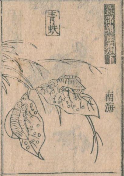 青蚨插图(6)