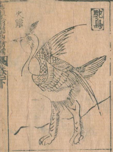 驼鸟插图1