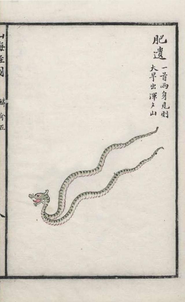 肥遗[蛇]插图
