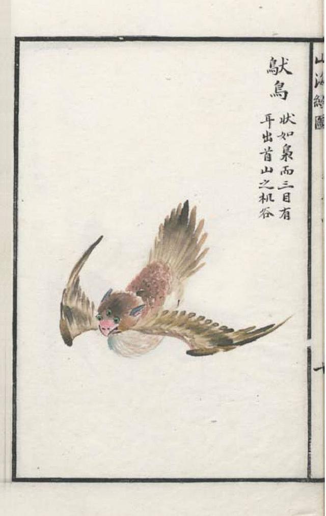 䲦鸟插图2
