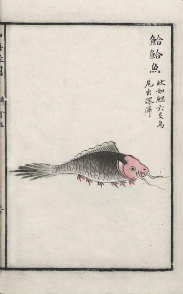 鮯鮯之鱼插图