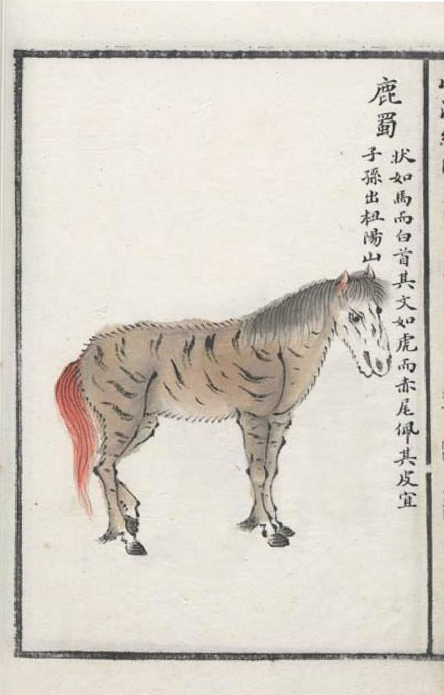 鹿蜀插图(1)