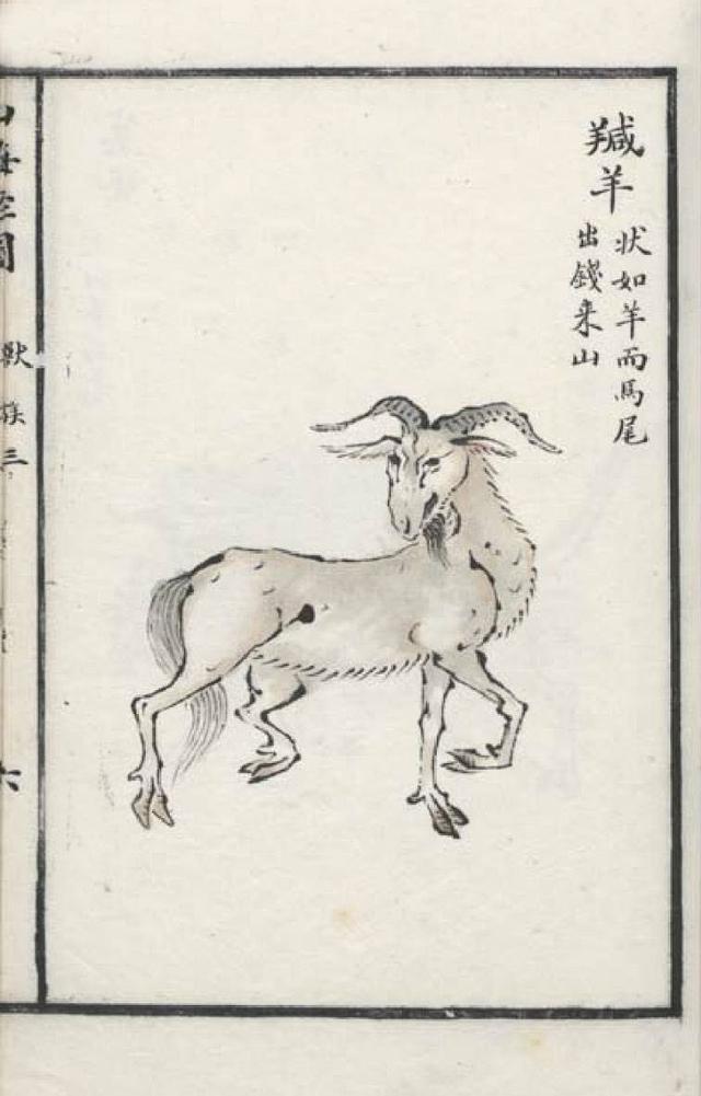 羬羊插图1
