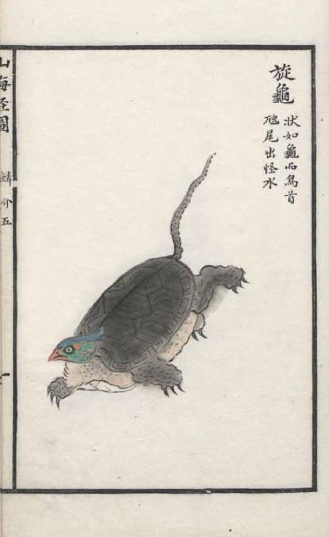 旋龟插图(1)