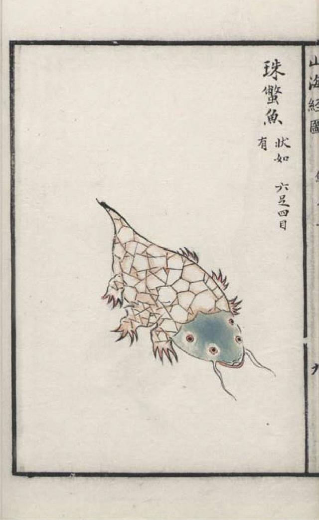 朱鳖鱼插图