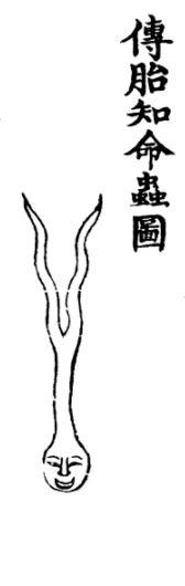传胎知命虫插图