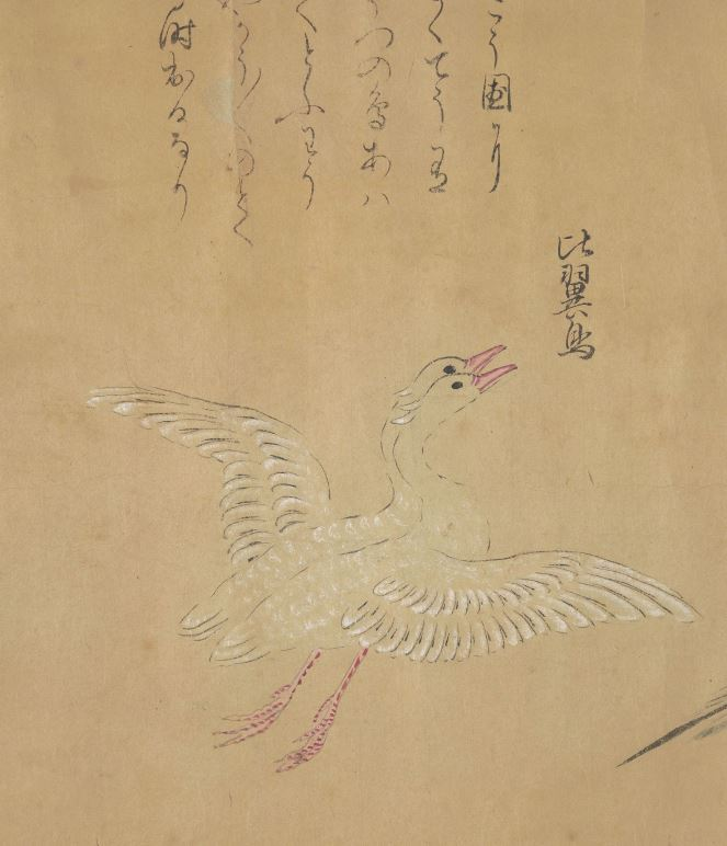 比翼鸟插图(1)