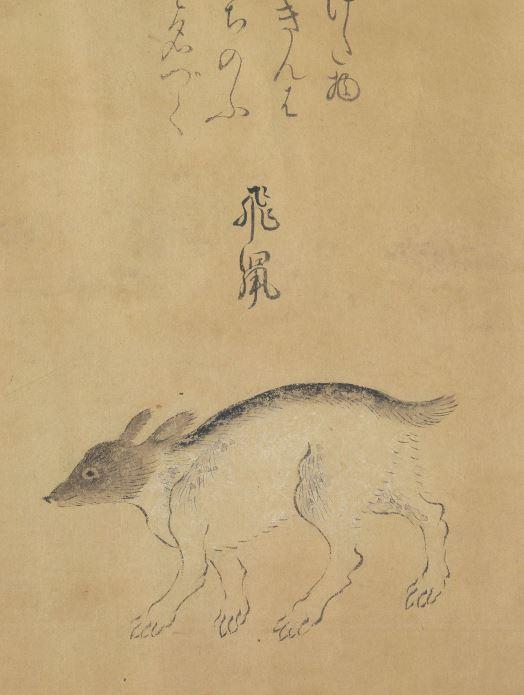 飞鼠插图(3)