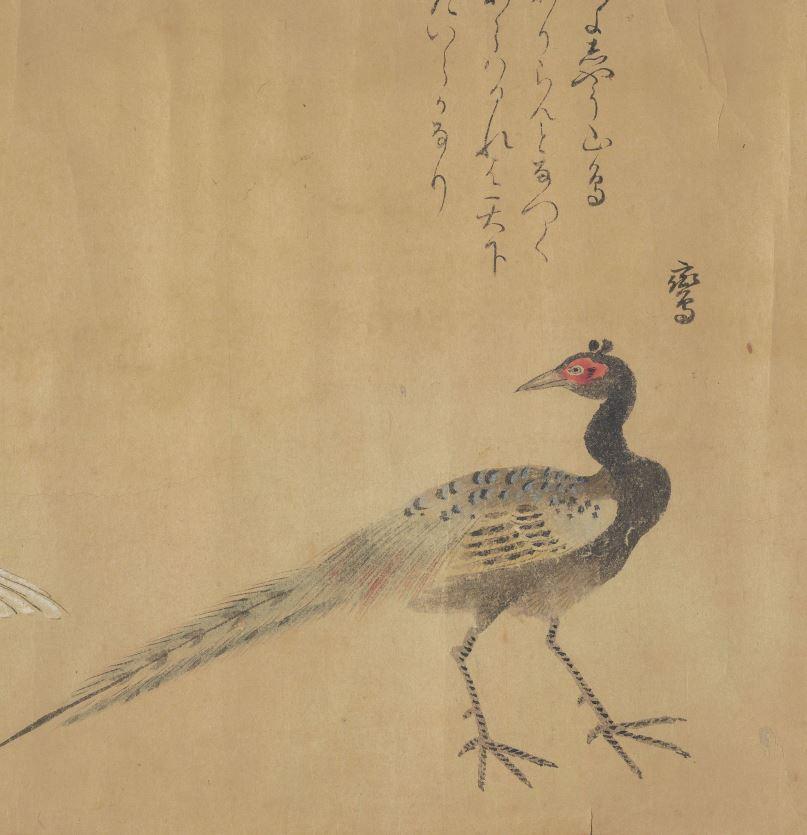 鸾插图(3)