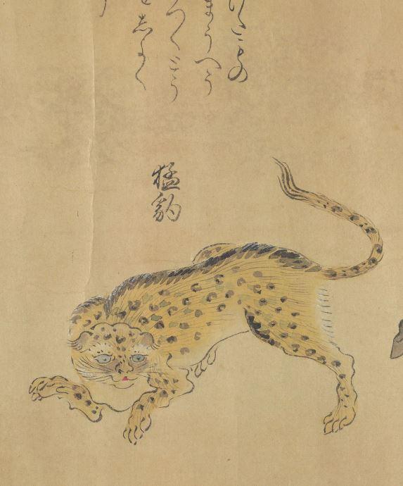 猛豹插图(1)