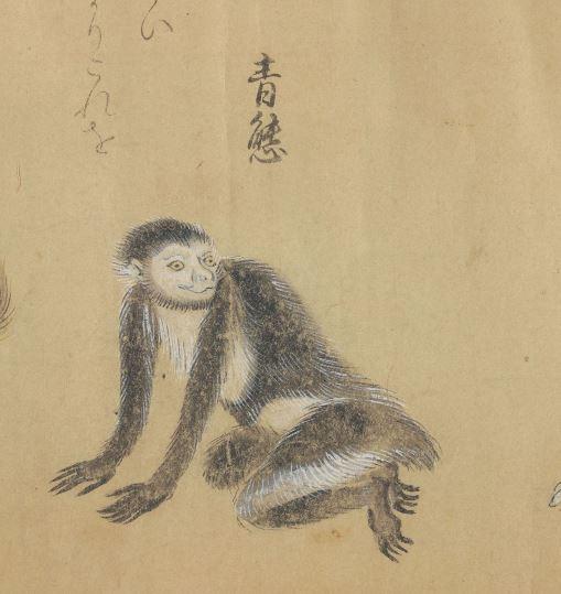 青熊插图(2)