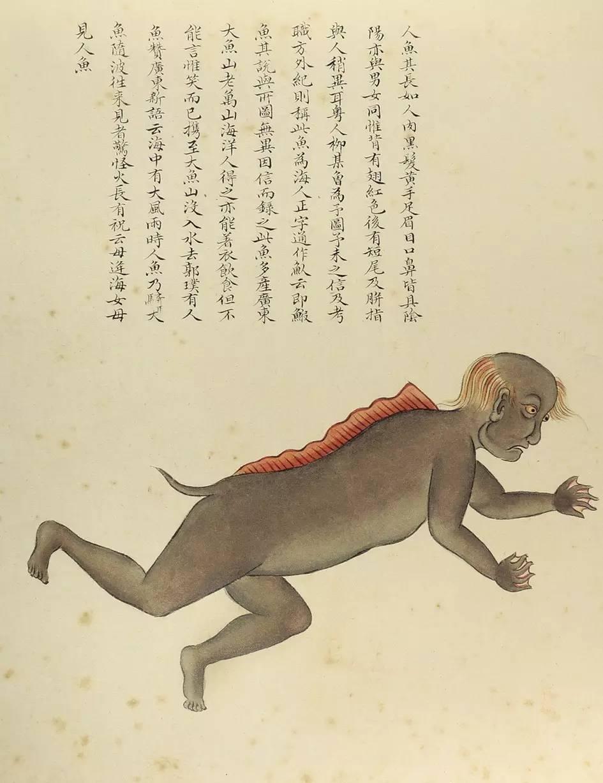 海人鱼插图(1)