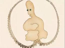 寿星章鱼插图1