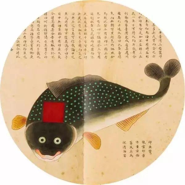印颊鱼插图