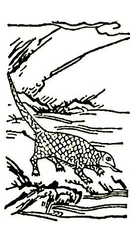 鲮鲤插图1