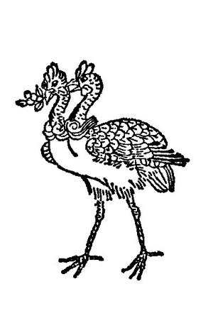 命命鸟插图