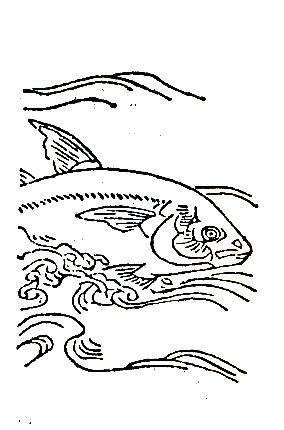 王鲔插图(1)