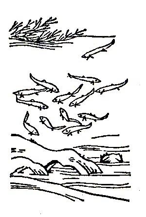 王馀鱼(鲙残)插图