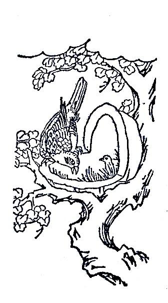 冶鸟插图(2)