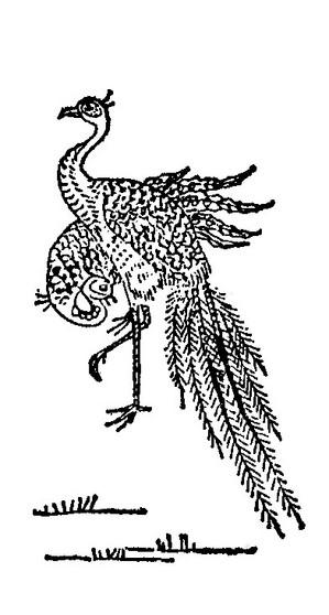 鸾插图(2)