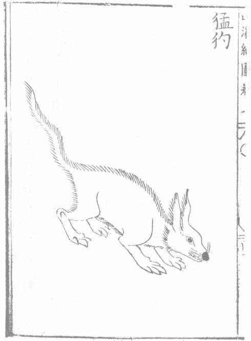 猛豹插图(2)