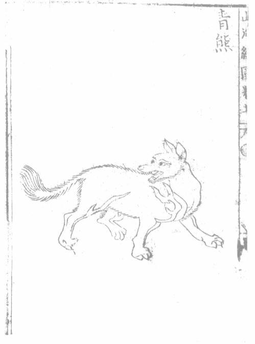 青熊插图(1)