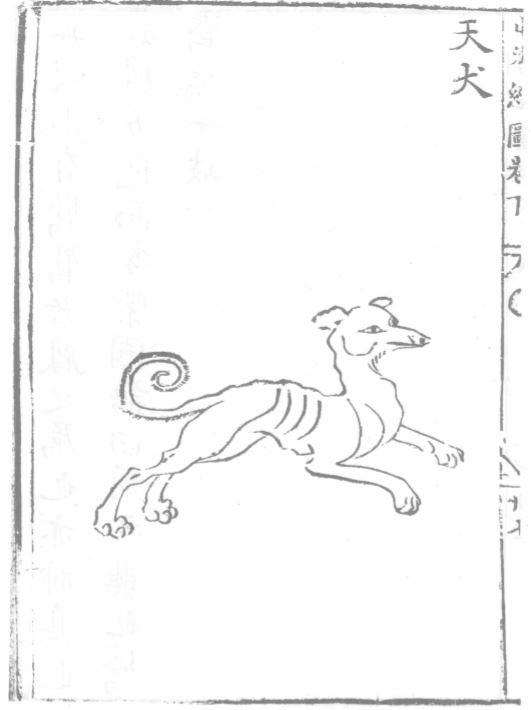 天犬插图2