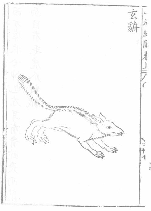 玄貈插图2