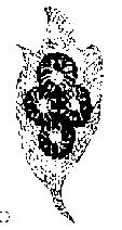 九虫插图17