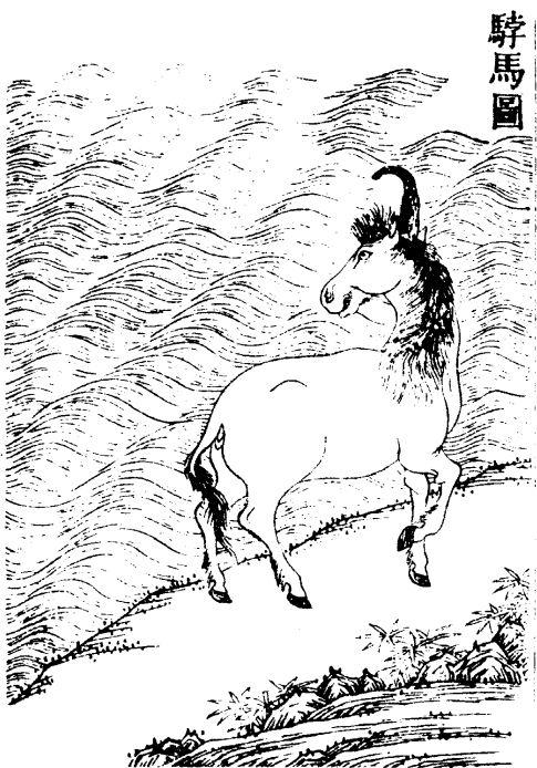 𩣡马插图(1)