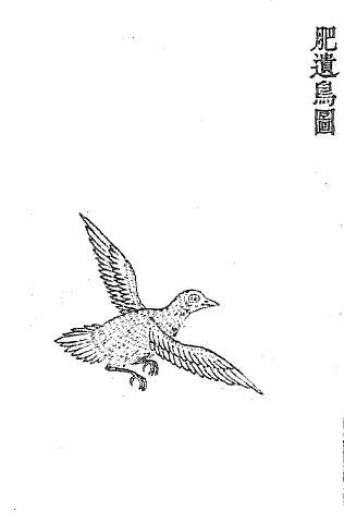 肥遗[鸟]插图1