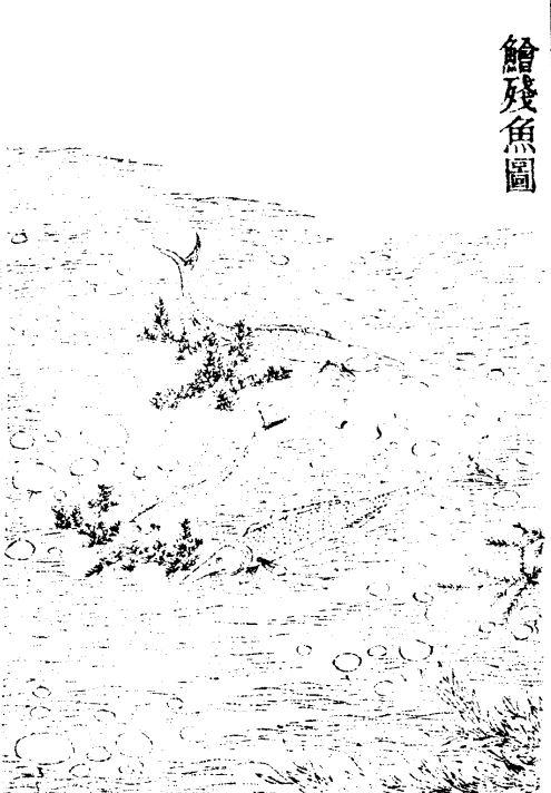 王馀鱼(鲙残)插图1