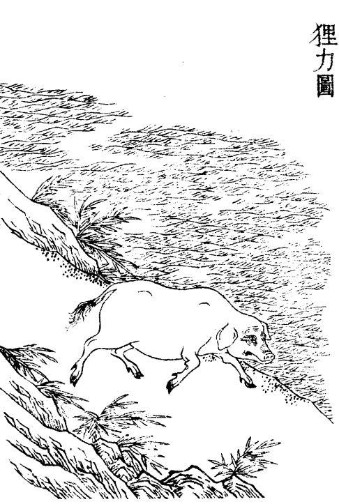 狸力插图1