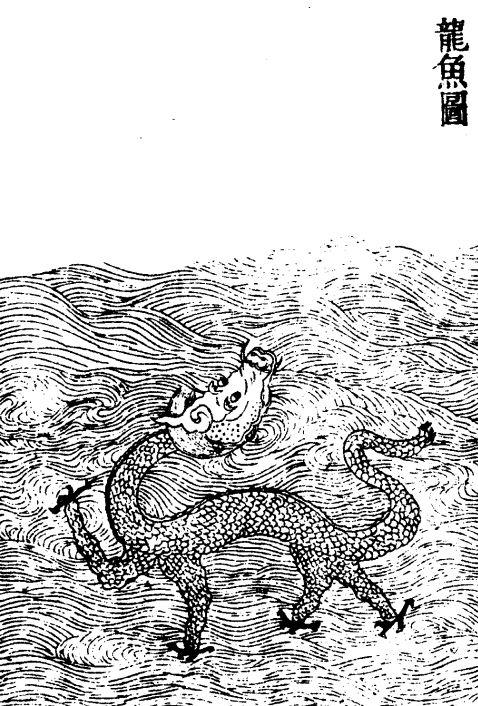 龙鲤(龙鱼)插图