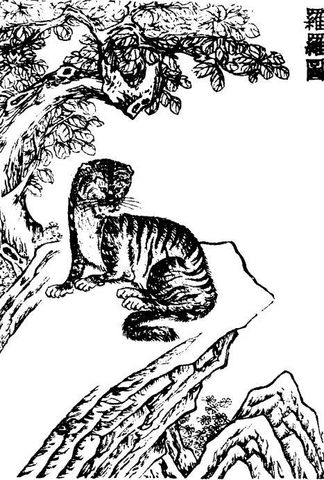 罗罗[兽]插图