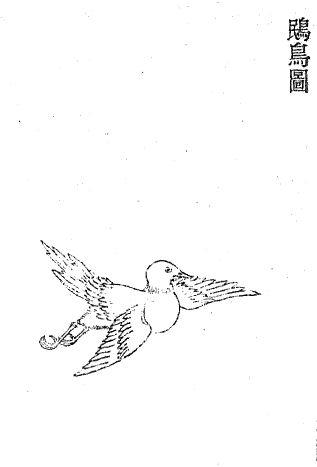 鴖插图(1)