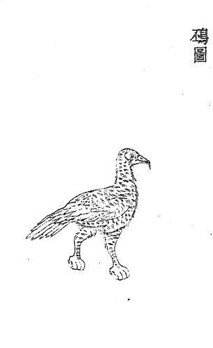 钦䲹插图1