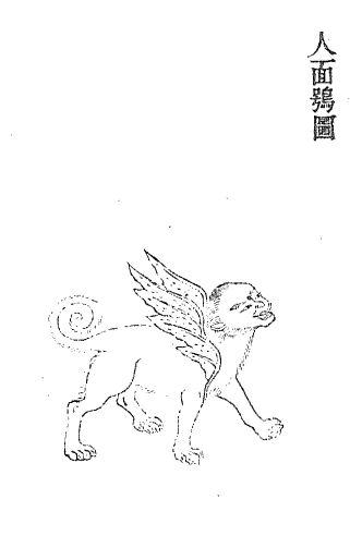 人面鸮插图2