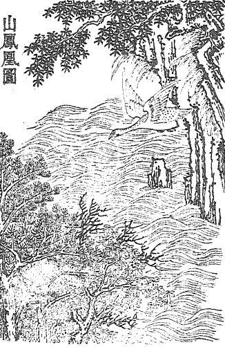 山凤凰插图