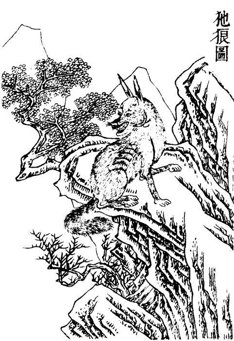𤜣狼插图1