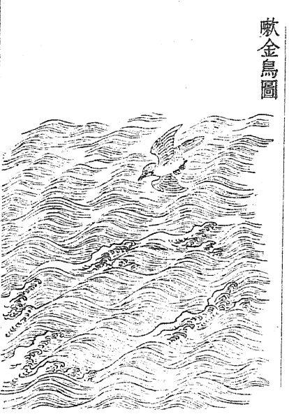 嗽金鸟插图(2)