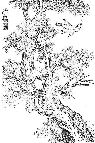 冶鸟插图(1)