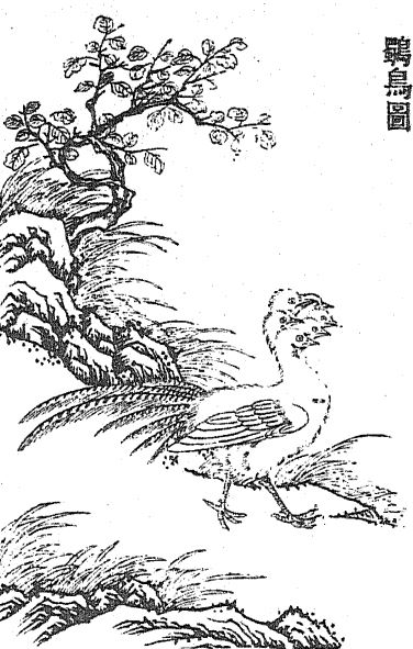 𪇆鸟插图(2)